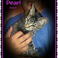 Adopt A Pet :: Pearl - Richmond, CA