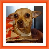 Adopt A Pet :: Hurricane Harvey Millie - TX - Tulsa, OK