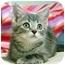 Photo 3 - Domestic Shorthair Kitten for adoption in Overland Park, Kansas - Maya