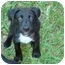 Photo 2 - Terrier (Unknown Type, Medium) Mix Puppy for adoption in Baton Rouge, Louisiana - Brady