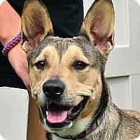 Adopt A Pet :: Winter - white settlment, TX