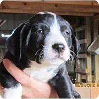 Adopt A Pet :: Spader - Westbrook, CT