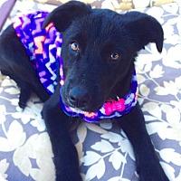 Adopt A Pet :: Tia Rose - Scottsdale, AZ