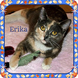 Calico Cat for adoption in Atco, New Jersey - Erika