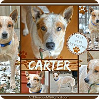 Adopt A Pet :: Carter - Delano, MN