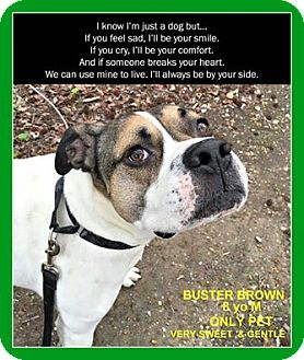American Bulldog Mix Dog for adoption in Wantagh, New York - Buster Brown
