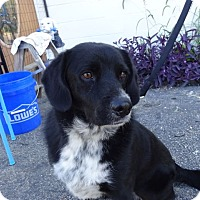 Adopt A Pet :: Shadow - Delaware, OH