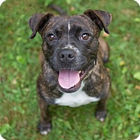 Adopt A Pet :: Della - Drumbo, ON
