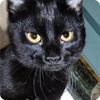 Adopt A Pet :: Elli - Waupaca, WI