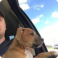 Adopt A Pet :: Tank - Broken Arrow, OK