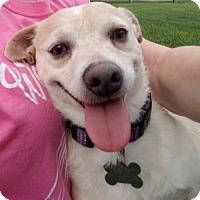 Adopt A Pet :: Rex - Beavercreek, OH