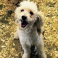 Adopt A Pet :: Travis - Del Rio, TX