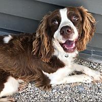 Adopt A Pet :: Gidget - Green Bay, WI