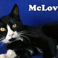 Adopt A Pet :: McLovin - Carencro, LA