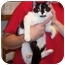 Photo 1 - Domestic Shorthair Cat for adoption in Stuarts Draft, Virginia - Maggie
