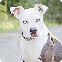 Adopt A Pet :: Sophie - Kingston, WA