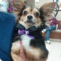 Adopt A Pet :: Pepe - Encinitas, CA