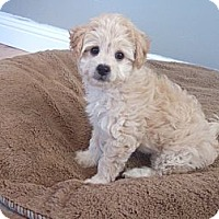 Adopt A Pet :: Ruby - Stockton, CA