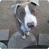 Adopt A Pet :: Amos - Alliance, NE