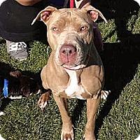 Adopt A Pet :: Kim SUPER URGENT - Sacramento, CA