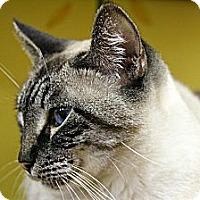 Adopt A Pet :: Whisper - Mobile, AL