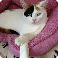 Adopt A Pet :: Pisces - Hamilton, ON