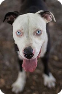 Terrier (Unknown Type, Medium) Mix Dog for adoption in Bradenton, Florida - Sinatra  ***In Foster***
