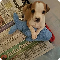 Adopt A Pet :: Roscoe - Byhalia, MS