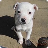 Adopt A Pet :: THELMA - Williston Park, NY