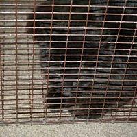 Adopt A Pet :: VESPER - Aurora, IL