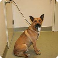 Adopt A Pet :: 351866 - Wildomar, CA