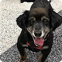 Adopt A Pet :: Rudy-ADOPTION PENDING - Sacramento, CA
