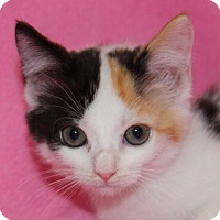 Adopt A Pet :: Sunflower - Hillsdale, IN