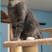 Adopt A Pet :: Shady - Metairie, LA