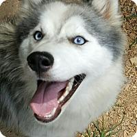 Adopt A Pet :: Nova - Gainesville, GA