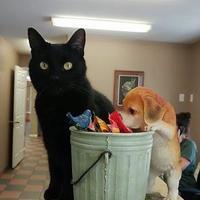 Adopt A Pet :: Frank - Moncton, NB