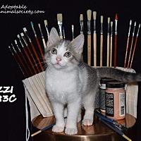 Adopt A Pet :: Izzi - Spring, TX
