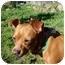 Photo 4 - Pug/Boxer Mix Dog for adoption in Castro Valley, California - Bruiser