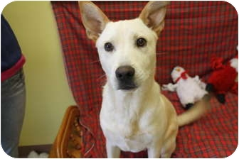Labrador Retriever Mix Dog for adoption in Rockingham, North Carolina - Spencer