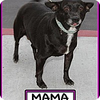 Adopt A Pet :: Mama - Fowler, CA