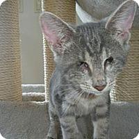 Adopt A Pet :: Smokey - Bayonne, NJ