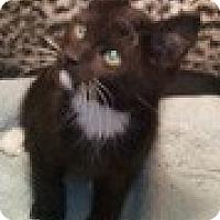 Adopt A Pet :: Polo - Anchorage, AK