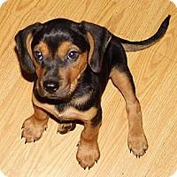 Adopt A Pet :: Talia - Bel Air, MD