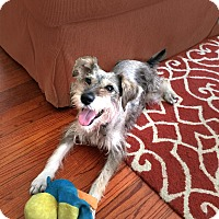 Adopt A Pet :: Sammie- Video! - Houston, TX