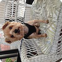 Adopt A Pet :: Mikey - Leesburg, FL