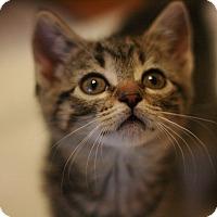 Adopt A Pet :: Saharra - Canoga Park, CA