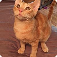 Adopt A Pet :: Pringle - McDonough, GA