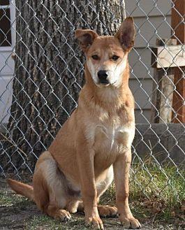 Australian Cattle Dog Mix Dog for adoption in Dodson, Montana - Bambi