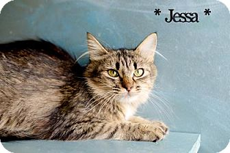 Domestic Mediumhair Cat for adoption in West Des Moines, Iowa - Jessa