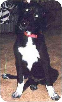 English Springer Spaniel/Retriever (Unknown Type) Mix Dog for adoption in Owatonna, Minnesota - Jinnie